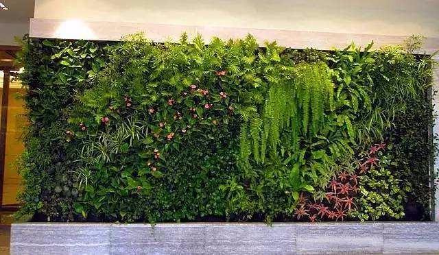 昆明植物墙价格