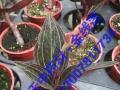 种植白芨,金线莲,重楼找中农蓝天