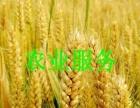 种子农药化肥加盟 农业用具 投资金额 1万元以下
