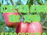 湖南红富士苹果价格    3113