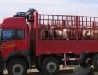 山西种牛场,山西太原种牛场,山西种牛养殖场