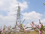 雙流最美農家樂柏楊湖開業啦 現實版的十里桃林 世外桃源