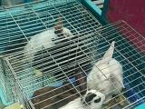 大兔子30-小兔子10