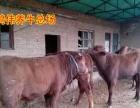 太原牛交易市场