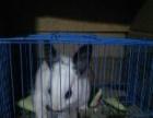 一只眼睛特别漂亮的小兔子