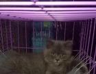猫咪3个月,公的,现低价出售,身体健康,棒棒哒