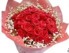 洛阳市全城鲜花预定送货上门洛龙区玫瑰百合康乃馨