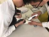 深圳南山区海上世界24小时可以接诊宠物医院收费合理