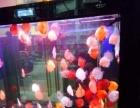 宜昌市专业清理,维护,安装鱼缸金龙水族鱼缸批零