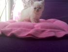 家里的小猫猫,找新家家,1200元