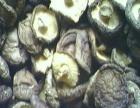 康盛达食用菌 康盛达食用菌加盟招商
