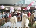 上海黄浦区白驼羊租赁-矮脚马出租-小香猪租售-婚礼庆典暖场