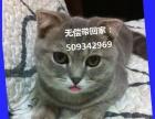 我的宝贝折耳猫超级可爱,要送人了,有疼爱的主领养。