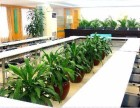 專業承接酒店 寫字樓 賓館 單位綠植租擺 綠植養護