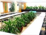 专业承接酒店 写字楼 宾馆 单位绿植租摆 绿植养护