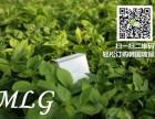 韩国玻尿酸H6长效滋润清爽 24小时补水保湿锁水!