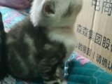 小猫咪找妈妈 快来