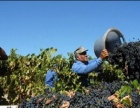 农场工出国去美国月入2万很正常