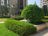 杭州下城綠植租賃花卉銷售苗木批發綠化施工