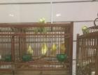4个成鸟都是公子,4个鸟仔,一个自己做的木质鸟笼子,急售