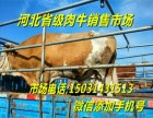 牛羊牲畜市场天天牛犊