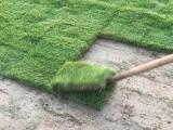武汉马尼拉草皮多少钱一个平方 鄂州马尼拉草坪价格