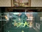飞利浦T8潜水灯100CM 金龙红龙鱼诱发色专用灯865