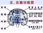 第六感脑力教育 思维脑图学习法 速成班