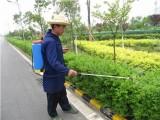 佛山綠化養護服務一站式駐場園林綠化養護