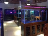 哪里有鱼缸/时尚可丽爱鱼缸出口/珠海市香洲龙鱼世家水族馆