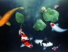 鱼缸专业保洁清洗 鱼池专业保洁清洗 鱼缸维修