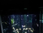 济南鱼缸养护,水草缸养护,海水缸养护,鱼缸消毒安装