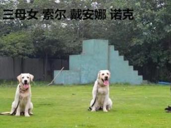 成都明星訓犬學校,您身邊的訓犬專家,專業有保障