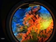 坐潜水艇看珊瑚