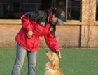 中山伊甸护卫犬训练基地(爱狗狗,这一站就够了)