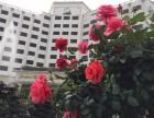 珠海酒店预订珠海星级度假村客栈民宿推荐珠海附近酒店查询