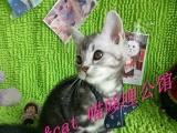 MISS&CAT 喵哆哩公馆虎斑弟弟妞妞找爸妈