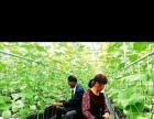 出国海外就业(韩国济州岛)