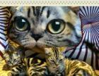 注册CAA猫舍寻求合作宠物店