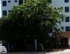 出租三亚周边乐东黄流镇公寓楼+果园鱼塘