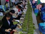 淮安水果货源品牌招商 城市优果加盟