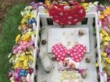 深圳全市宠物火化宠物殡葬,墓地服务全深圳上门接送