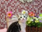 本地大型猫舍,实体店宠物猫宝宝16窝出售中