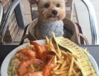上海出售纯种雪纳瑞幼犬自家养的宠物狗狗健康有保障