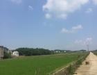 上饶鄱阳县600亩水田出租(650 元/亩/年)