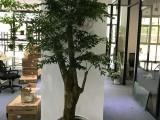上海办公室绿植租赁 绿植租摆 鲜花花篮12年经验