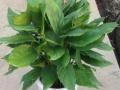 专业室内绿植租摆,花卉租赁,租花,花卉销售,价格从优