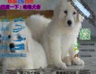 哪一家宠物店卖纯种健康的大白熊多少钱一只