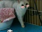 猫咪小可爱等你带回家~