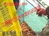 虾苗价格种虾价格;盱眙龙虾苗种,小龙虾苗,提供专业养殖技术